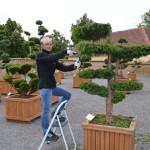 Tvarování zahradních bonsají