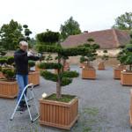 Zastřihávání zahradní bonsaje