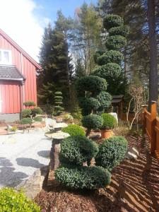 Ze zahrady po výsadbě stromů
