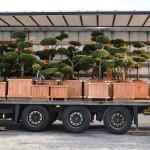 Doprava stromů