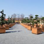 showroom okrasných stromů 1