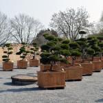 showroom okrasných stromů 5