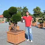showroom okrasných stromů 6