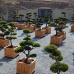 showroom okrasných stromů 7