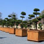 showroom okrasných stromů 8