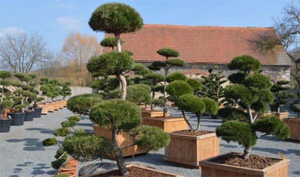 Vyberte si z tvarovaných okrasných stromů